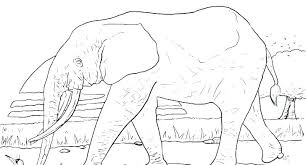 Pictures Of Elephants To Color Rollingmotorsinfo