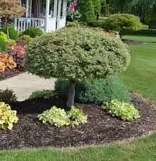Small Picture 23 Landscaping Ideas with Photos