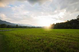 grass field sunset. Wide Angle View Of A Countryside Sunset With Grass Field In The Foreground O