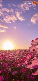 Nature Flower Samsung Galaxy Wallpaper ...