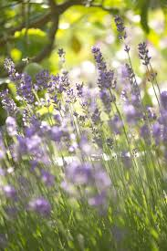 Kitchen Garden Preserves 17 Best Images About Herbs On Pinterest Gardens Preserve And