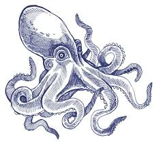Small Picture 46 best Image File images on Pinterest Drawings Octopus drawing