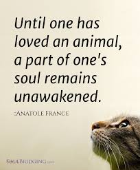 simple truths quotes about attitudes animals