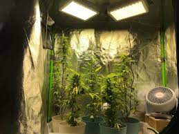 Not Enough Light For Plants Second Grow Not Enough Light Two 300w For Five Plants Not