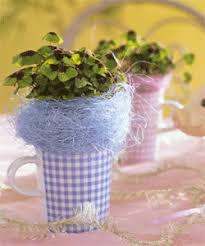 Flower And Plant Gifts And Decorations  Harry U0026 DavidChristmas Gift Plants