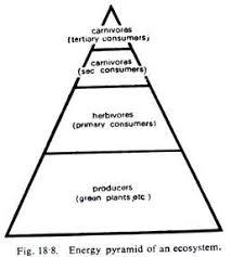 write an essay on ecological pyramids uk dissertation write an essay on ecological pyramids