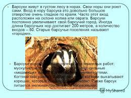 Животные красной книги россии фото и описание для детей класса  Фото животные красной книги россии фото и описание для детей 3 класса