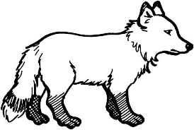 Small Picture Arctic Fox Coloring Pages