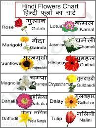 Uses Of Marigold Flower In Hindi Villastowingservice Com