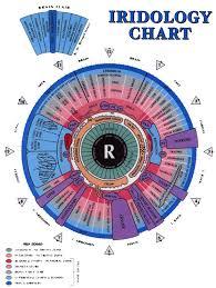 What Is Iridology Chart Iridology Chart Right Eye Illia Heart
