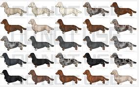 Dachshund Color Chart Daschund Color Palette Dashund Dachshund Dog Grooming