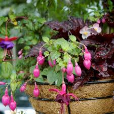 17 Water Saving Tips For Container Gardens  The Micro GardenerContainer Garden Ideas For Shade