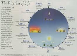 Circadian Rhythm Clock Chart Herbal Sleeping Tablets