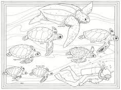 Small Picture Sea Turtle Coloring Coloring worksheets Sea turtles and Turtle