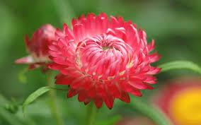 Nature Flower Wallpaper Download Hd