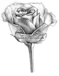 Small Picture How to Draw a Rose Learn to Draw Rose Pencil Drawings Art is Fun
