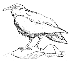 Small Picture Raven 2 Animals Printable coloring pages