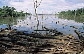 Image result for problems facing wetlands
