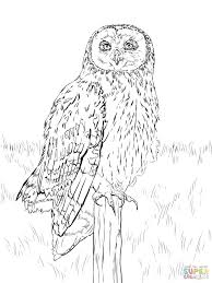 nocturnal animals coloring pages. Exellent Coloring Nocturnal Animals Coloring Pages Colouring Intended Nocturnal Animals Coloring Pages