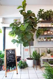 room plants x: dont let anyone fool you growing indoor plants is easy and just as fun as having an outdoor garden
