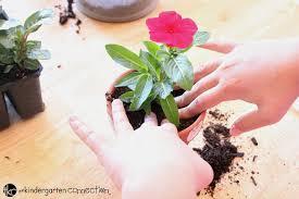 ผลการค้นหารูปภาพสำหรับ Put the soil in a flowerpot rose