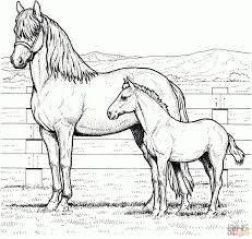 75 Kleurplaat Paard En Veulen Amazing Coloriage