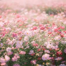 Flower Aesthetic PC Wallpaper (Page 5 ...