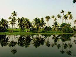 Kerala Nature 4k Wallpaper