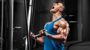 maximise muscle gain and fat loss