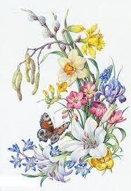 Pin od JMP na printables - flowers, plants   Pinterest   Daffodils ...