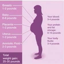 Pregnancy Weight Gain Month By Month Chart Pin On Baby Development