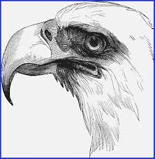 Eagles Football Coloring Pages 35 Luxury Bald Eagle Coloring Page