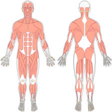 4,950 likes · 1 talking about this. Download Tibialis Anterior Getbodysmart Muscular System Png Image With No Background Pngkey Com