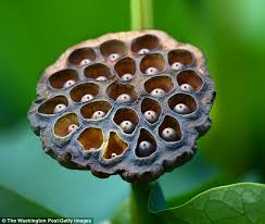 Fear Of Patterns Interesting Fear Of Holes Could Reveal A Deep Anxiety Of Parasites Daily Mail