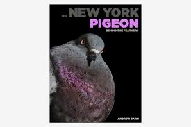 the new york pigeon behind the feathers by andrew garn