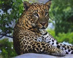 beautiful wild animals wallpapers. Beautiful Wild Latest Full HD Wild Animals Wallpapers With Beautiful