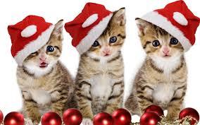 Free download Christmas Kitten HD ...