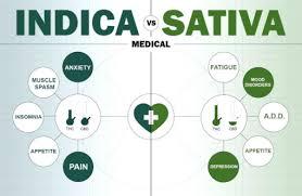 Indica Sativa Hybrid Chart Sativa Vs Indica Vs Hybrid Understanding The Difference