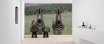 African Zebras Trendy Fotobehang Photowall