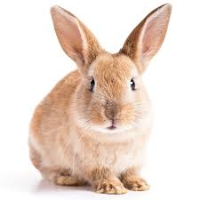 Image result for bunny