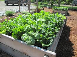 Plants For Kitchen Garden Our Kitchen Gardens Flourish Grow Compost Of Vermont