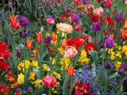 planting bulbs in your flower garden