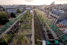 urban agriculture and health assessing
