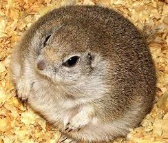 Image result for old pictures of hamsters