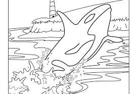 Small Picture Killer whale coloring page wwwbloomscentercom