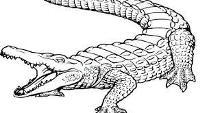 coloring pages alligator coloring book best part 5 page