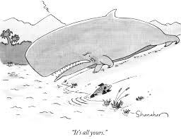 Whale Classification Chart Lesson Whale Evolution