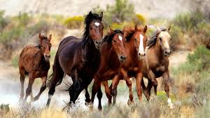 horses running in the wind.  Running On Horses Running In The Wind H