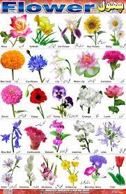 Flower Species Chart Bluebell Flower In Hindi Name Best Flower Site