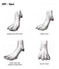 Http Www Canpropetstylists Ca Pictures Feet
